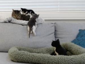Kittens can climb!